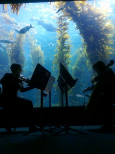 Performance with Judith Hamann at the Birch Aquarium, San Diego for Spring Fest 2013. Photo by Samuel Dunscombe.